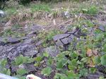 雑草に覆われるヒビ