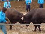 震災を乗り越えた牛たちの取り組み
