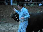 長島さんと子牛